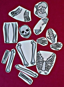 Skeleton cut outs 2