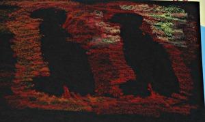 African stencils vultures