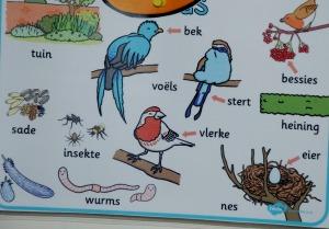 Afrikaans bird
