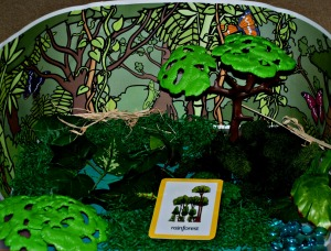 Rainforest habitat tray