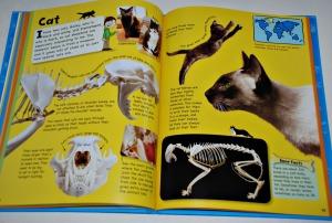 Jake's Bones Cat page