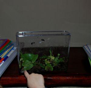 Snail inspecting
