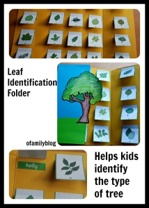 Helping Kids identify trees based on the shape of it's leaves