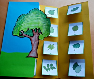 Identifing a tree based on its leaves ofamilyblog