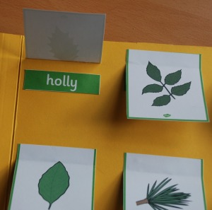 Leaf identification card folder on ofamilyblog