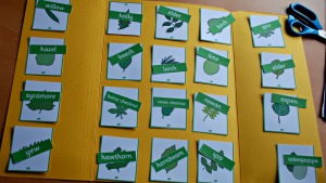 Leaf identification cards - setting them all out before you glue