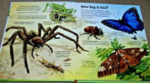 Usborne Big book of big bugs