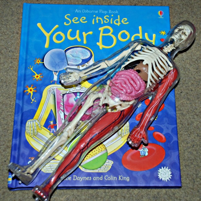 Learning about the human body with the Usborne see inside your body and Smart Lab Squishy Human Body