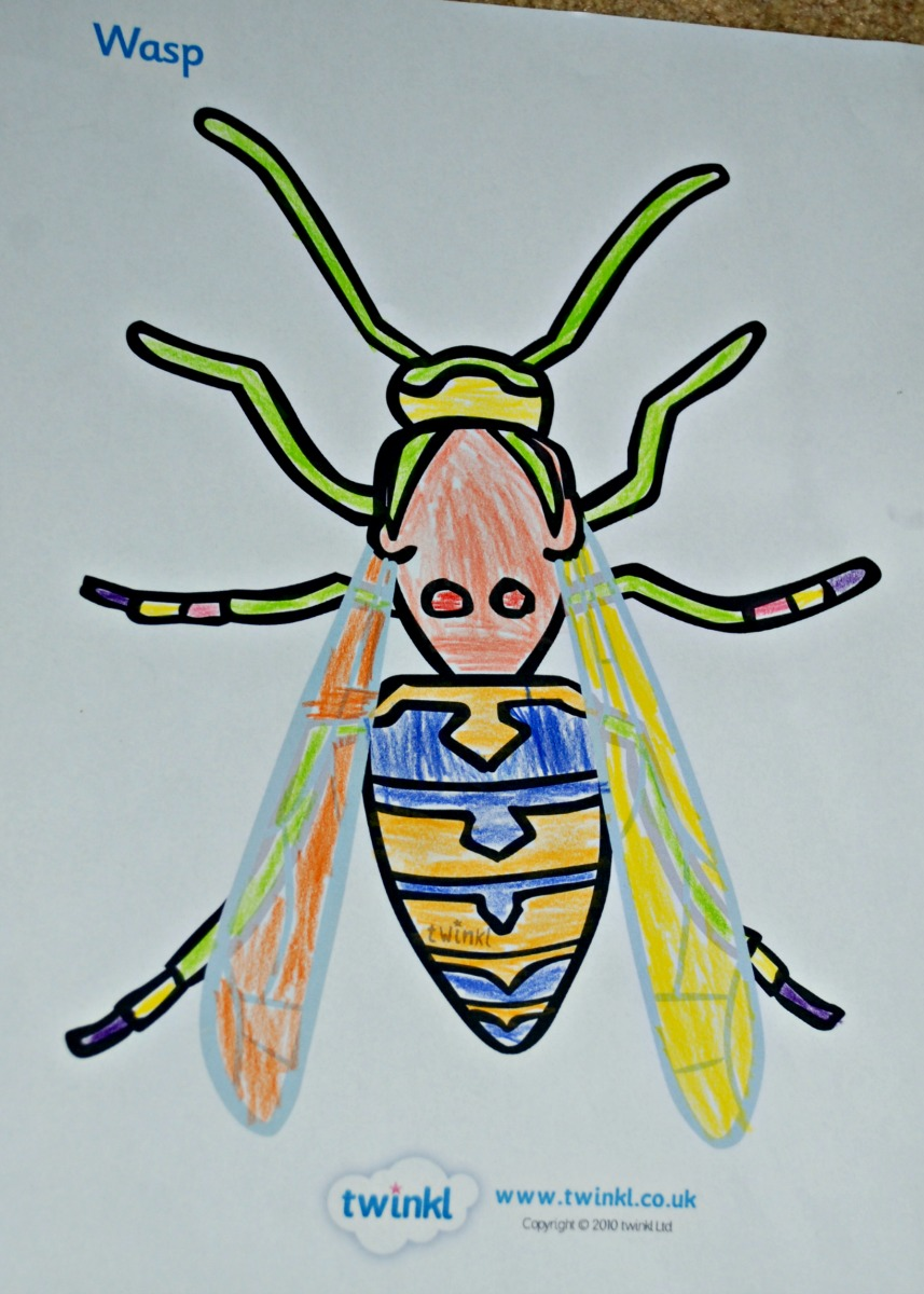 Colouring in sheets twinkl - Minibeast Wasp Colouring Page
