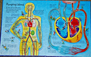 Usborne See Inside Your body what a double page looks like