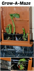 Grow-A-Maze Great for giving young kids an up close view of how plants grow.  Brilliant addition to any home learning
