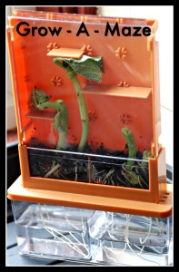 Grow-A-Maze kit as used by the kids on ofamilyblog
