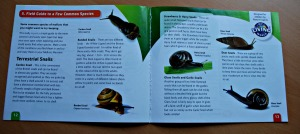 Snail World set contains a very informative book