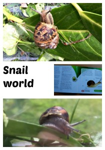 snails snails snails.  young kids learning about snails with the help of snail world