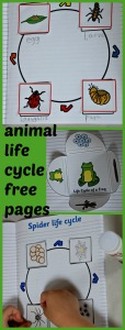 animal life cycle book made by kids using free pages from Twinkl website