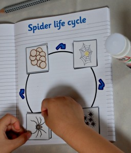life cycle making our spider life cycle page