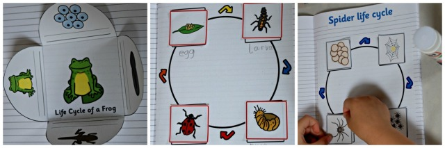 Make Your own Animal Life Cycle book with young kids