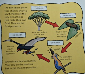 Staying alive explain an animal food chain in details