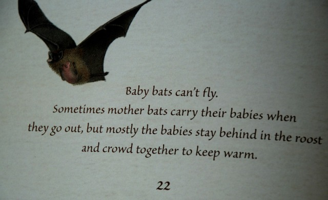 Bats love the Dark