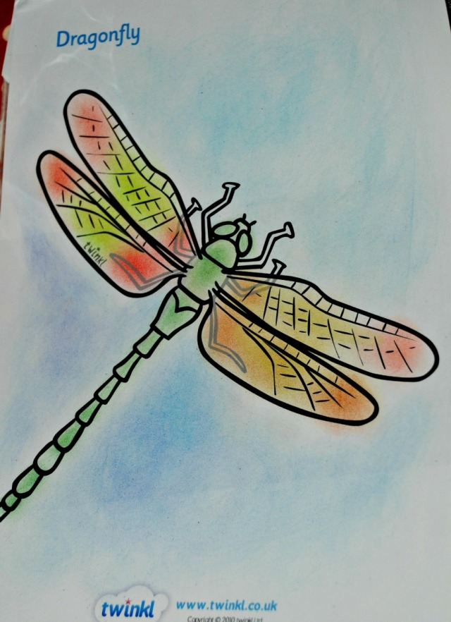 Mad about Mininbeast dragonfly