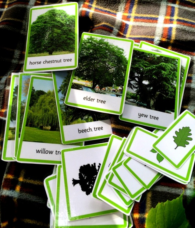 twinkl-3-part-tree-cards-a-fun-way-to-get-the-kids-identifying-the-trees-around-them