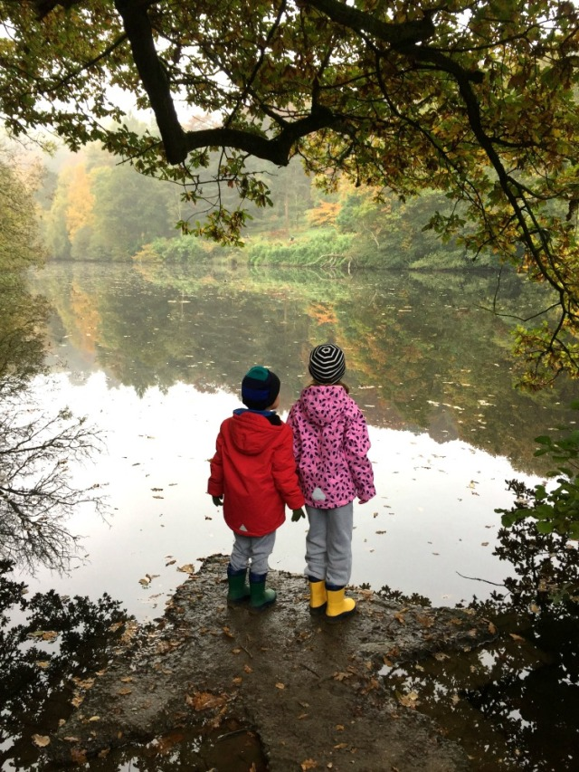 an autumn walk at winkworth national trust site