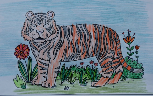 Tiger Mindfulness colouring page part of the Jungle Mindfulness colouring set currently free to download