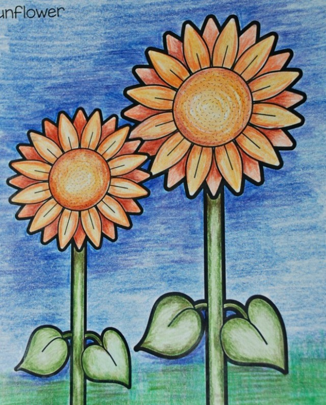 Teaching my daughter how to shade by using a sunflower colouring in page from Red Ted Art