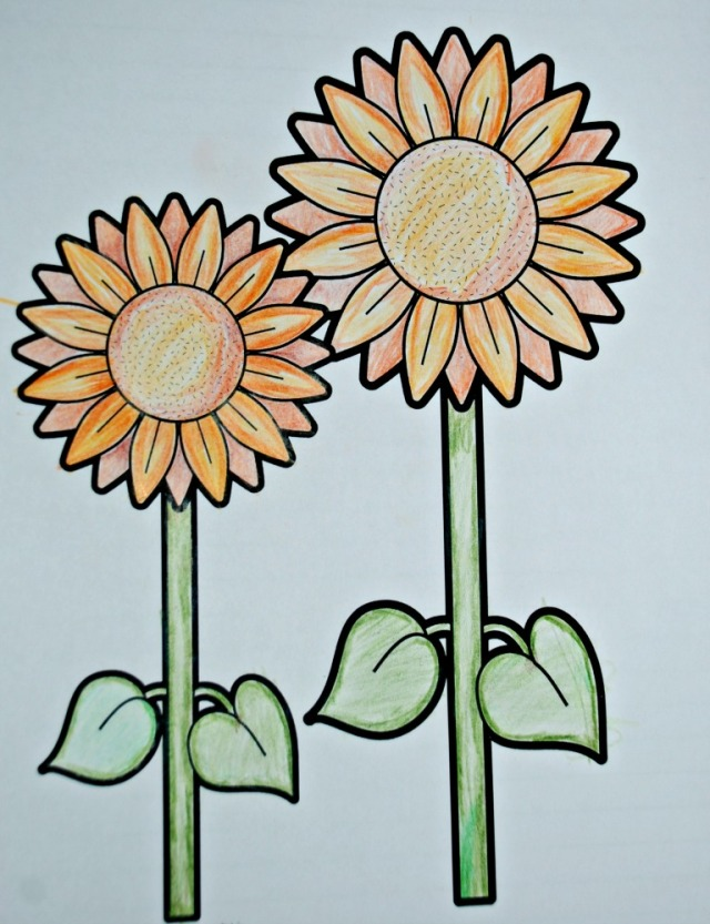 Sunflower colouring in picture from Red Ted Art website