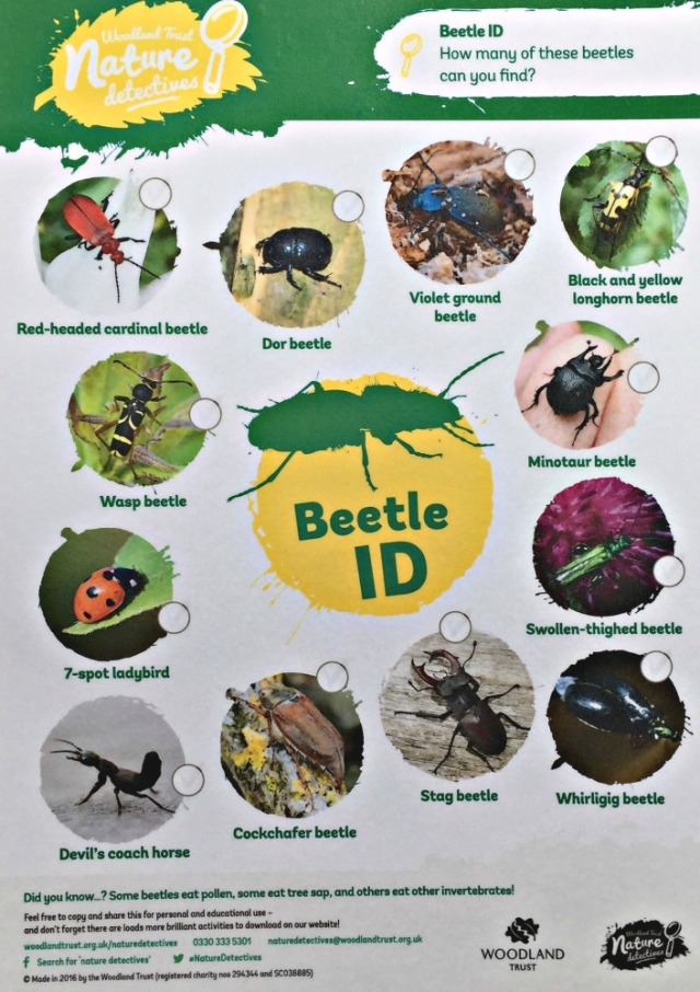 Beetle ID spotter sheet from the Woodland Trust. Free to download