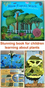 How Plants Work.  A stunning children's book all about plants.  A brilliant book for kids who want to learn about flowers, trees and other plants