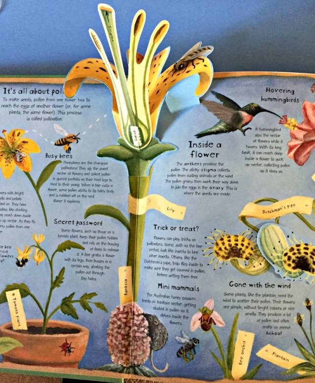 How Plants Work. A stunning children's book all about plants