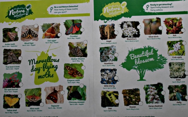Marvellous day-flying moths and beautiful blossom spotter ID sheets from the Woodland Trust
