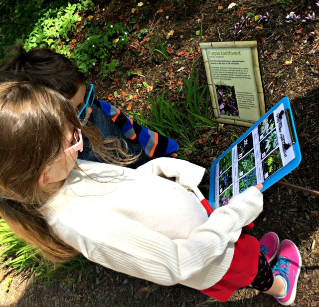 Doing a Spring Flower Hunt and learning about other flowers in the process