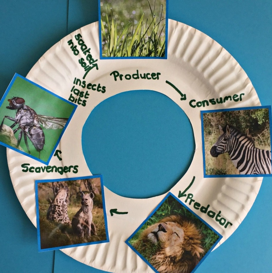 African animal food chain including a lion created using images from Twinkl Food Chain Sorting Activity. Science for kids activity