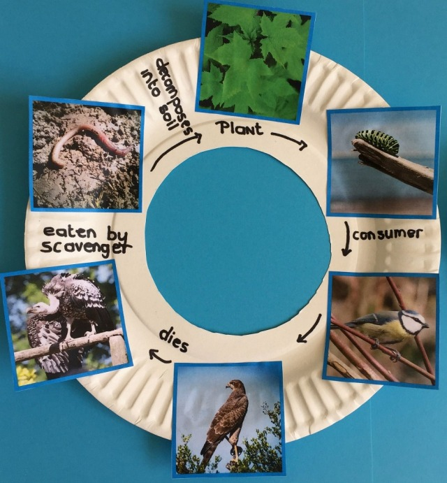 Bird Food Chain created using images from Twinkl Resources food chain sorting activity