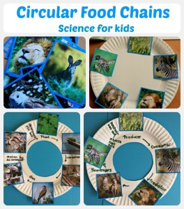 Circular Food Chains. A great science activity for children made using paper plates and images from Twinkl Resources