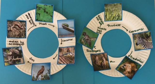 Circular Food Chains created using images from Twinkl Resources. Shows the full cycle from plant back to the animals decomposing and going back into the soil again