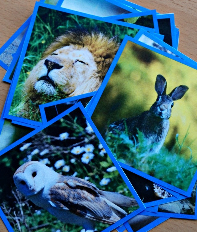 Food Chain sorting cards from Twinkl Resources. Perfect for teaching children about the food chain