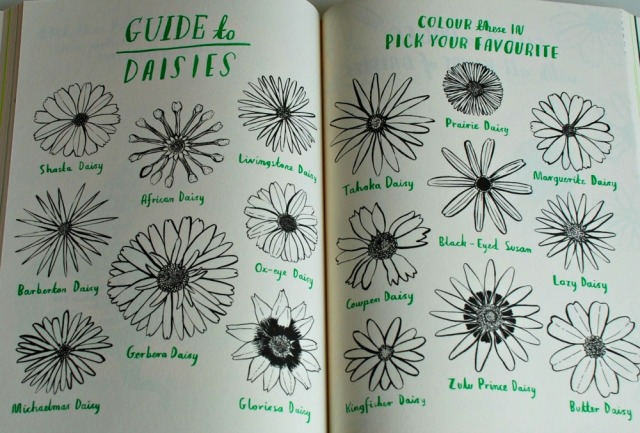 Hello Nature, children's book which has stunning colouring, drwing making activities and lots of information scattered amongst the pages like the Guide to Daisies