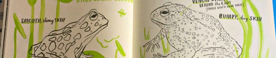 Hello Nature children's book includes the difference between frogs and toads