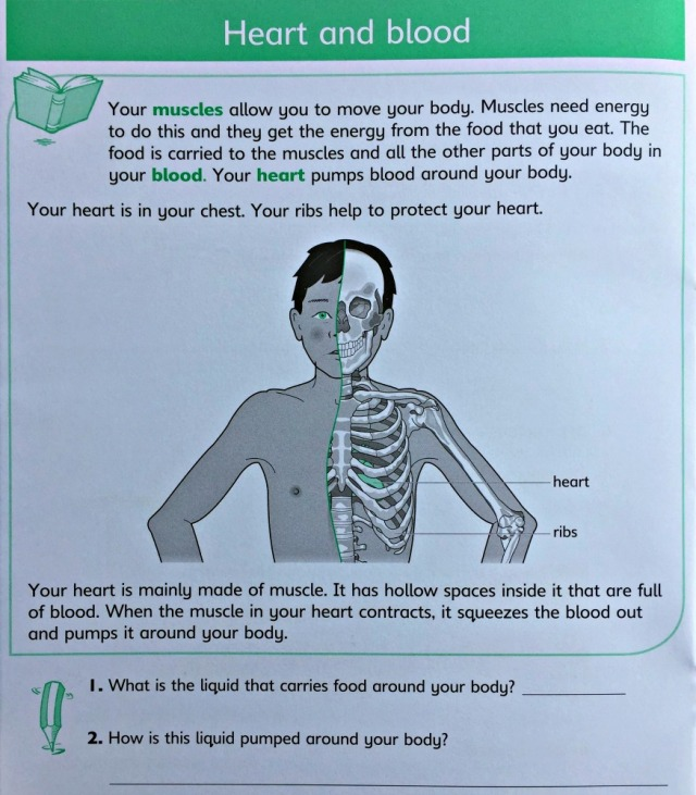 Understanding Science Our Bodies Workbook includes a section on the Heart and blood