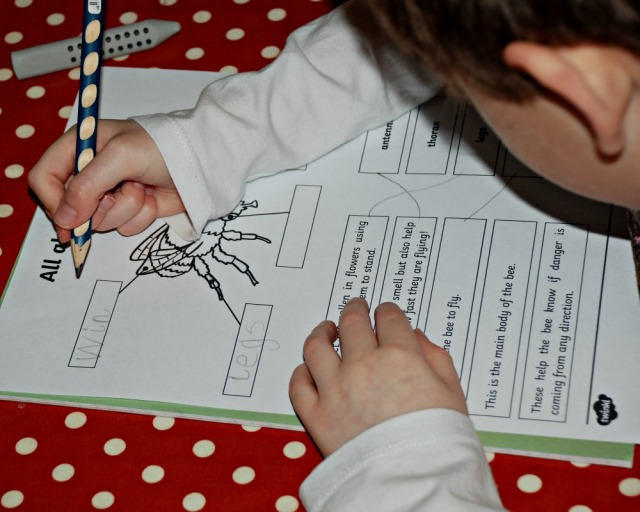 All about Bees worksheet from Twinkl Resources