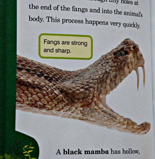 Animal Planet Chapter Book Snakes. Lots of information about snakes and great pictures