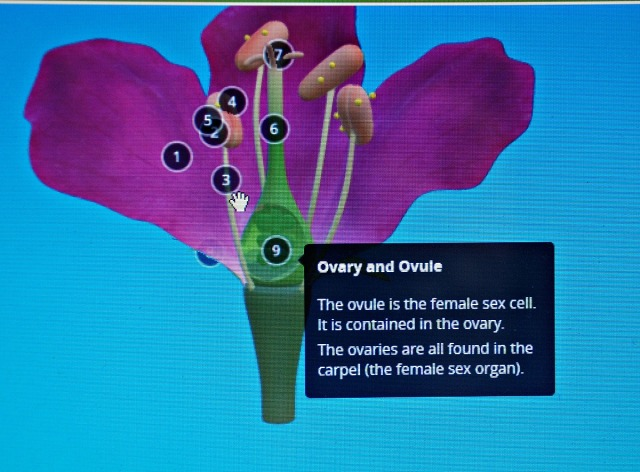 Oaka Digital. An example of one of the extra Science resources. A 3D image of a flower