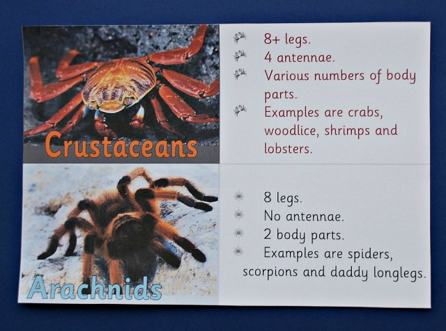 Teachit Primary Website. Free to download animal classification cards