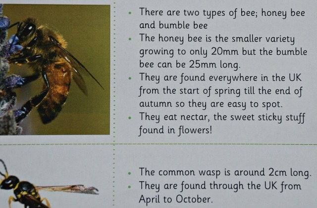 Teachit Primary Website. Minibeast Fact cards include bees and wasps