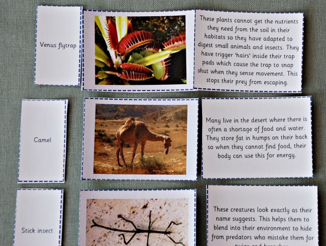 Teachit primary Website Science Resource. Animal and Plant Adaption Cards. Key Stage 2 ages