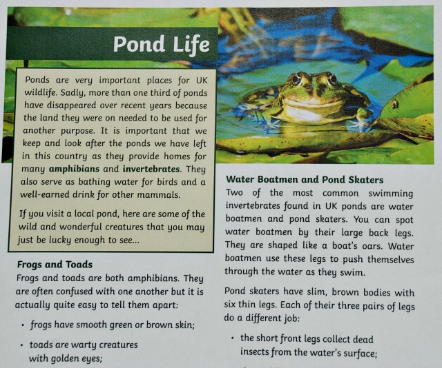 BBC Springwatch and Twinkl KS2 reading comprehension Pond Life