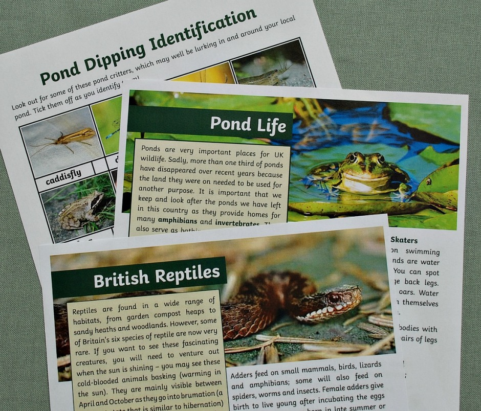 BBC Springwatch and Twinkl reading comprehensions. Free to download for the month of June